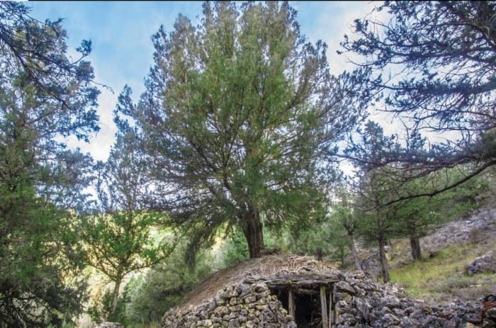 I guia de arboles y arboledas singulares de la comarca de molina de aragon y alto tajo_asociacion micorriza