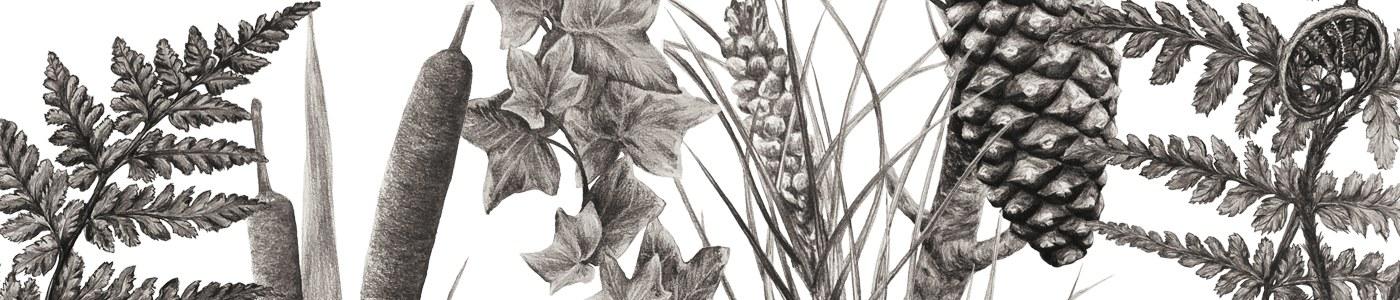 ETNOBOTÁNICA ABULENSE: Las plantas en la cultura tradicional de Ávila_Emilio Blanco Castro