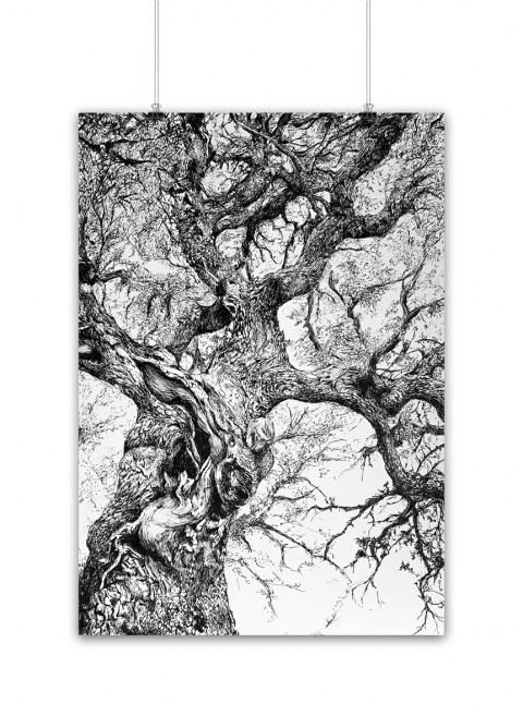 Encina Conceja_Quercus ilex_ilustracion boligrafo_micorriza