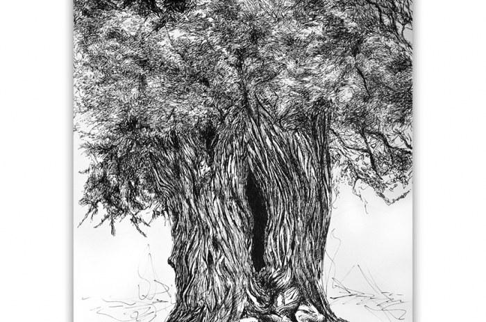 Sabina Arbol_Ilustracipn original hecha a mano_Boligrafo sobre papel